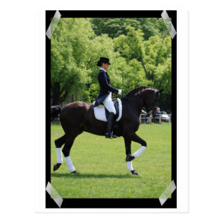 Dressage Horse Show Rider on Postcard
