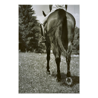 DRESSAGE IN THE DAISIES 13 x 19 Print