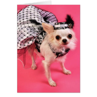 Dressed Up Chihuahua Card