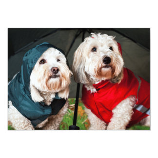 Dressed up dogs under umbrella personalized announcement