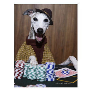 Dressed up Whippet dog at gambling table Postcard