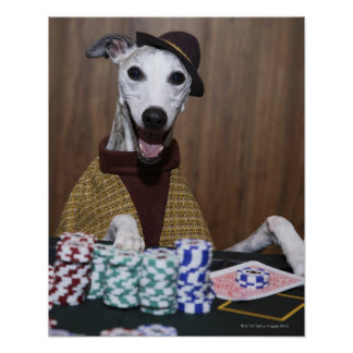 Dressed up Whippet dog at gambling table Posters