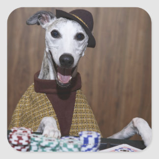Dressed up Whippet dog at gambling table Square Sticker