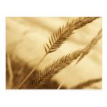 Drew Sullivan - Prairie Grass Postcard