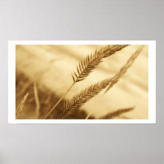 Drew Sullivan - Prairie Grass Poster