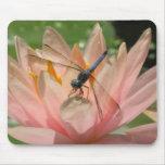 Drgonfly en lirio de agua alfombrilla de raton