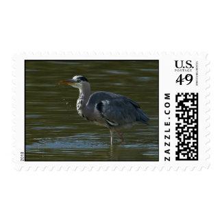 Dribbling Heron Postage