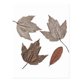 Dried Autumn Leaves Postcard