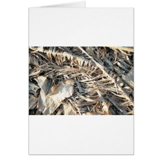 Dried Banana tree fronds background Card