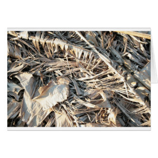 Dried Banana tree fronds background Cards