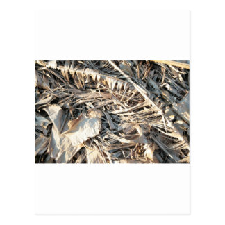 Dried Banana tree fronds background Postcard