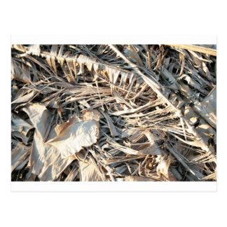 Dried Banana tree fronds background Postcards