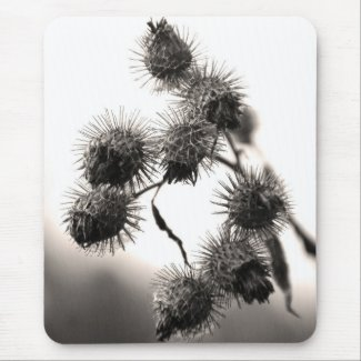 Dried burdock