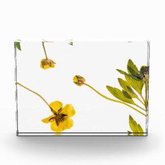 Dried buttercup flowers award