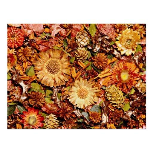 Dried flowers  flowers postcard