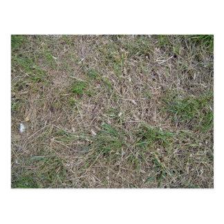 Dried grass texture postcard