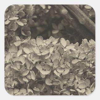 Dried Hydrangea in a sepia tone Square Sticker