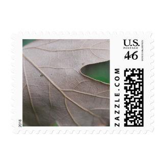Dried Leaf mf Stamps