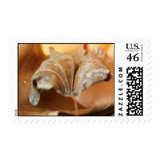 Dried Leaves Postage Stamp