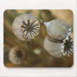 Dried Poppy Heads Mouse Pad