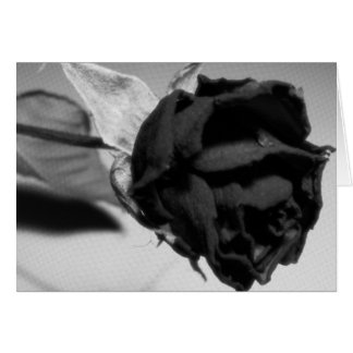 Dried Rose Photograph - Black & White Card
