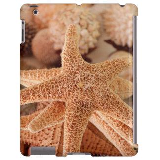 Dried sea stars sold as souvenirs