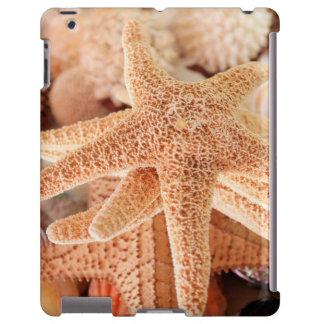 Dried sea stars sold as souvenirs 2