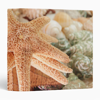Dried sea stars sold as souvenirs 2 3 ring binder