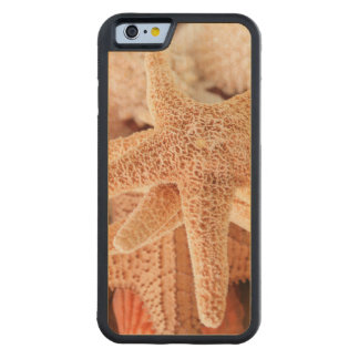 Dried sea stars sold as souvenirs 2 carved maple iPhone 6 bumper case