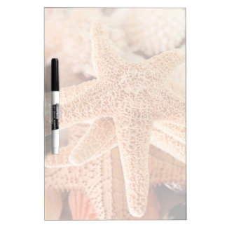 Dried sea stars sold as souvenirs 2 Dry-Erase board