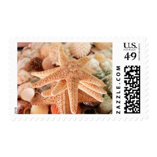 Dried sea stars sold as souvenirs 2 stamp