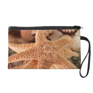 Dried sea stars sold as souvenirs wristlet clutches