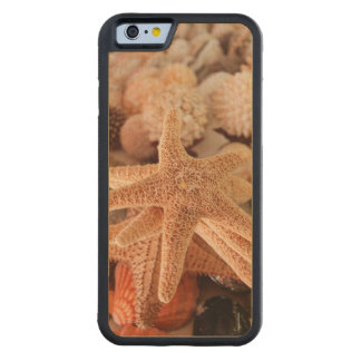 Dried sea stars sold as souvenirs carved maple iPhone 6 bumper case