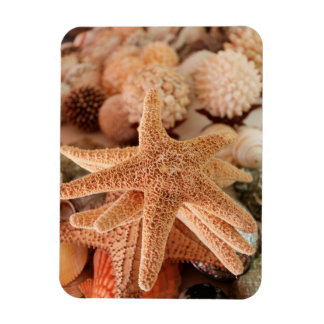 Dried sea stars sold as souvenirs magnet