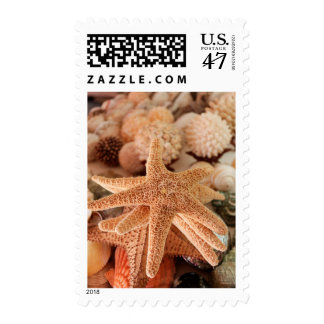 Dried sea stars sold as souvenirs postage stamp