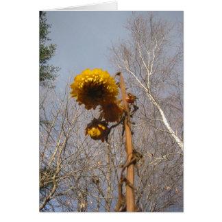 Dried Straw flower Stationery Note Card