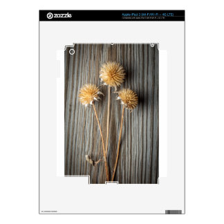 Dried Sun Flower iPad 3 Skin