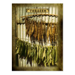 Dried tobacco leaves post card