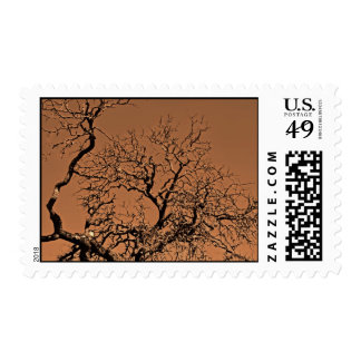 Dried tree branche's against the sky postage stamp