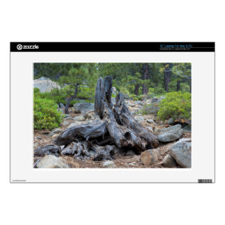 """Dried Tree Trunk In The Forest 13"""" Laptop Skin"""