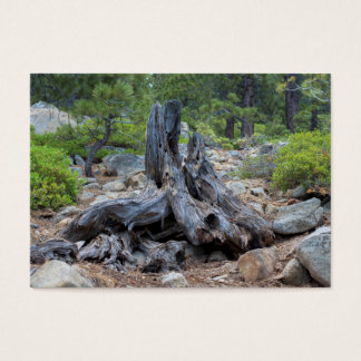 Dried Tree Trunk In The Forest Business Card
