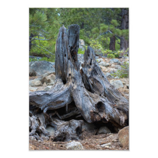 Dried Tree Trunk In The Forest Card