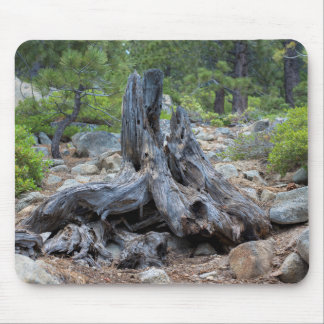 Dried Tree Trunk In The Forest Mouse Pad