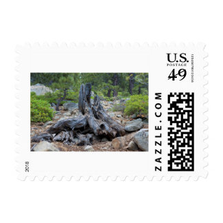 Dried Tree Trunk In The Forest Postage