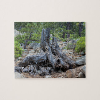 Dried Tree Trunk In The Forest Puzzle