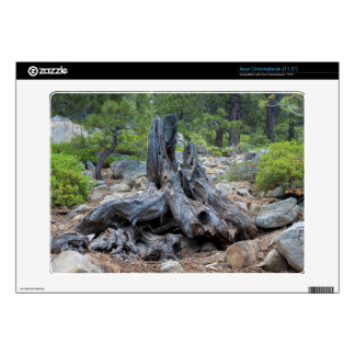 Dried Tree Trunk In The Forest Skin For Acer Chromebook