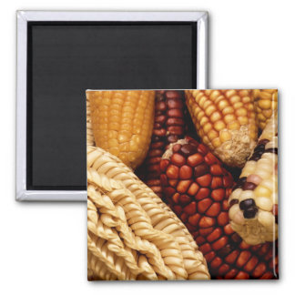 Dried up Fall Corn Magnet