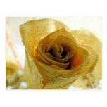 Dried White  Rose Postcard