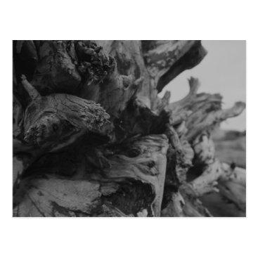 Lilest_Duncan Drift Wood 4 Postcard