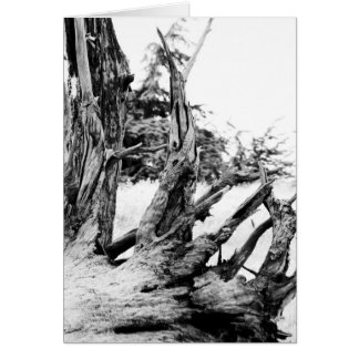 Drift Wood Card